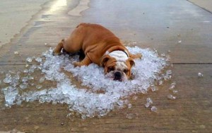 ghiaccio e cane