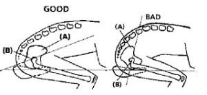 rotazione-iliaco-in-sella